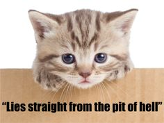 """""""Lies straight from the pit of hell,"""" """"War of Yankee Aggression,"""" and nine other quotes from actual politicians seeking statewide office in the 21st century. (Plus: kittens.)"""