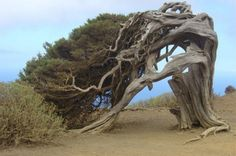 Interesting Trees-LOOKS LIKE A TREE THAT HAS SEEN MANY STORMS!