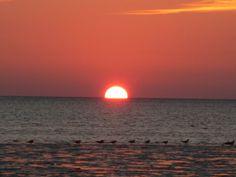 Sunset Pine Island Brooksville Fl Gulf Coast