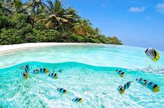 I just added a bunch of places to my travel bucket list - clearest waters to swim in before you die