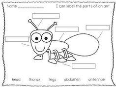 A Kindergarten Mini Unit on Ants