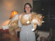Norwegian Forest Cat! @Chelsea Rose Rose Rose Spence-Crane... I have this pict of you and Irving on my wall! :)
