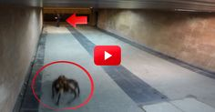 This Giant Spider Dog Prank Had Me Cracking Up! The Last Guy's Reaction Was Priceless!   The Animal Rescue Site Blog