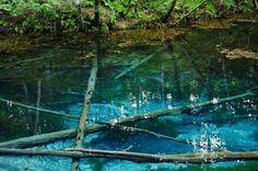 Beautiful Places In Japan, Japan Landscape, Fish Ponds, Japan Travel, Nice View, Cool Pictures, Aquarium, Places To Go, Sunrise