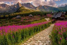 Hala Gąsienicowa. #goryponadwszystko #tatry_official #tatrasadventures #tatras_mountain_photo #halagasienicowa #tatry #vysoketatry #mountains #landscape #landscapephotography #passion #flowers #zakopane #visitpoland #poland #fotografia #gory #photo #valley #naturephotography #nature #outdoors #flowerart #slovakia #tatramountains #naszlaku #polskiegory #natgeo #portaltatrza%C Land Scape, To Go, Mountains, Places, Nature, Photography, Outdoors, Painting, Passion