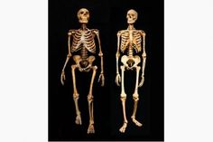 Were Neanderthals a sub-species of modern humans? New research says no
