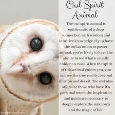 Owl Spirit Animal The owl spirit animal is emblematic of a deep connection with wisdom and intuitive knowledge. If you have the owl as totem or power animal, you're likely to have the ability to see Cat Spirit Animal, Animal Spirit Guides, Owl Quotes, Animal Quotes, Life Quotes, Wisdom Quotes, Animal Meanings, Spiritual Animal, Animal Medicine