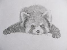 drawing by Panda-kiddie on deviantart