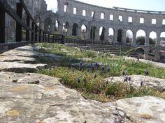 The Roman arena at Pula, via Carrie Vaughn's blog.