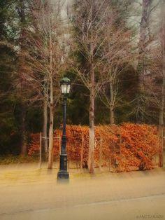 Lamp post, radiating