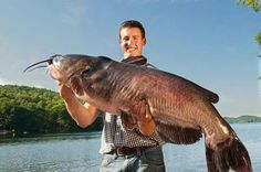 Three New Vermont State Record Fish Caught in 2012 Surf Fishing Tips, Pike Fishing, Fishing Videos, Going Fishing, Old Logan, Channel Catfish, Monster Fishing, Vintage Fishing Lures, Kinds Of Cats