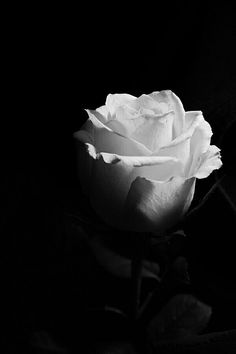 Black and White Beach Photography: Guide Take Better Photos – B & W Photography ltd Black And White Roses, Black And White Beach, Black And White Aesthetic, Black And White Wallpaper, Dark Wallpaper, Dark Photography, Black And White Photography, Maquillage Halloween, Flower Wallpaper