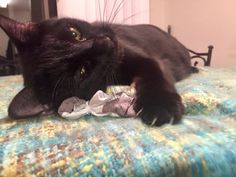 DIY: How to Make a Catnip Toy From an Old T-Shirt (My Cats Love This!) http://www.petful.com/buzz/make-catnip-toy-from-old-tshirt/