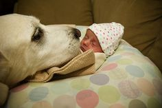 25 of the most adorable photos of dogs and their little humans