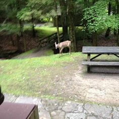 Deer visit Holly River state park cabin