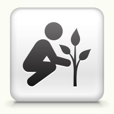 Square Button with Tree Planting royalty free vector art vector art illustration