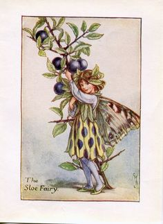 Sloe Flower Fairy Vintage Print, c.1927 Cicely Mary Barker Book Plate Illustration by TheOldMapShop on Etsy