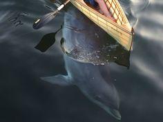 """Friederike Balzereit auf Twitter: """"Was für ein tolles Erlebnis. Delfin spielt…"""