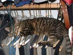 """la """"fantasia"""" dei gatti, è ineguagliabile."""