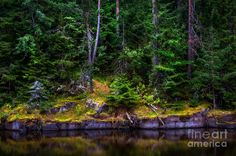 At The Water Edge. Island Valaam Photograph