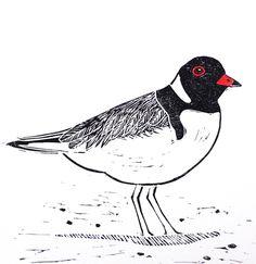 Excited to share the latest addition to my #etsy shop: Australian Bird Linocut Print / Hooded Plover Lino Cut / Australian Animal / Original Artwork / Black and White / Christmas #art #printmaking #valentinesday #linocut #handprint #australiananimal #australianbird #shorebird #hoodedplover