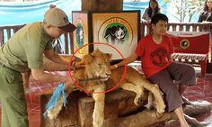 Pétition : Stop aux photos avec les lions, drogués et maltraités, à l'étranger ou dans les zoos !