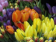 Kerri Messner added 124 new photos to the album: Philadelphia International flower show — at Pennsylvania Convention Center - Philadelphia, PA (Philly). Flower Show, Vegetables, Spring, Flowers, Plants, Vegetable Recipes, Plant, Royal Icing Flowers, Flower