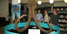 Redbridge Museum Manager and two Natural History Museum scientists next to the replica Ilford mammoth skull