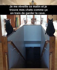30 Snap de chats à mourir de rire