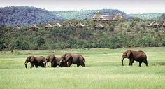 Katete, Lake Kariba, Zimbabwe. If you want to see elephants, this place is for you!