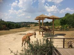 Prague Zoo...quite an experience!!!