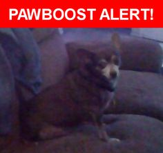Is this your lost pet? Found in Round Rock, TX 78664. Please spread the word so we can find the owner!  brown chiwawa  Nearest Address: Near Greenlawn Blvd & Parkside Cir