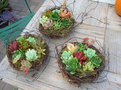 succulent plants and faux bird's nests! they look awesome!