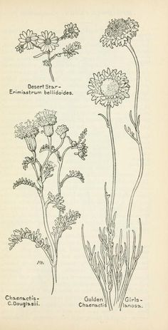 Field book of western wild flowers Margaret Armstrong