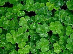 Happy St. Patrick's Day By Sterling Engagements Blog