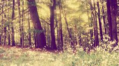 Image about forest in the woods by Sunshine on We Heart It Find Image, Mystic, We Heart It, Sunshine, Plants, Plant, Planting, Planets