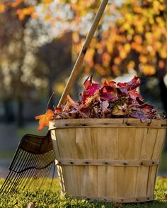 Time to rake up those fallen leaves