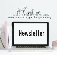 Don't miss a beat! Sign up for the monthly newsletter to find out more about what's going on at Paws & Tails Pet Photography as well as upcoming events & more that are exclusive to Newsletter subscribers!