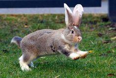 Binky Bunny!