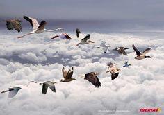 Iberia: Birds