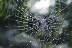 Hämähäkinseitti lähikuvassa | Suomen Luonto. Spiderweb in Finland