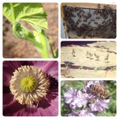 Who knew bees were the gateway-drug for me? On the value of besottedness & making/having the life i always wanted. <3
