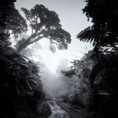 Parece um cenário de Jurassic Park. Numa das florestas da Indonésia.