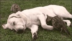 Nature & Animal Lovers - المنتدى - Google+