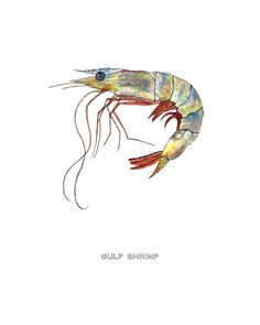 Gulf Shrimp- archival print, watercolor, seafood, food, kitchen. $20.00, via Etsy.    picture would be awsome for a tile set