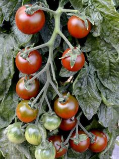 New vegetable seeds for my choice Growing Vegetables, Fruits And Vegetables, Seeds, Posts, Garden, Blog, Messages, Garten, Fruits And Veggies