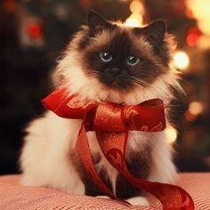 idée cadeau noel chien chat
