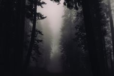 [#HD Wallpaper] Silhouettes of trees in a misty forest in Sequoia National Park - #Forest #Fog #CloudForest #Darkness Tree, Mist, Pixabay, Cloud - Photo by Susan Yin @syinq (unsplash) - Follow #extremegentleman for more pics like this!