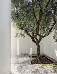 A Sicilian-born artist brings memories of his island home to life in a minimalist industrial loft in Milan. tuin Minimalism meets industrial chic in a Milanese loft Landscape Architecture, Landscape Design, Garden Trees, Industrial Chic, Garden Inspiration, Backyard Landscaping, Exterior Design, Outdoor Gardens, Outdoor Living