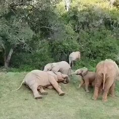 Boredom in Africa today! Cute Animal Videos, Funny Animal Pictures, Cute Little Animals, Cute Funny Animals, Cool Pets, Cute Dogs, Animal Antics, Tier Fotos, My Animal
